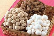 鮮菇 燉滷上桌