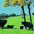口感清爽、營養健康的牛肉料理