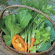 自己種菜讓陽台變菜園!